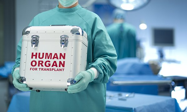 Image of health professional in scrubs holding a small organ transport box